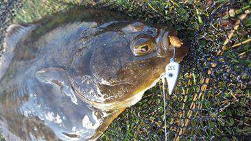 Isome worm- works wonders for flounders!